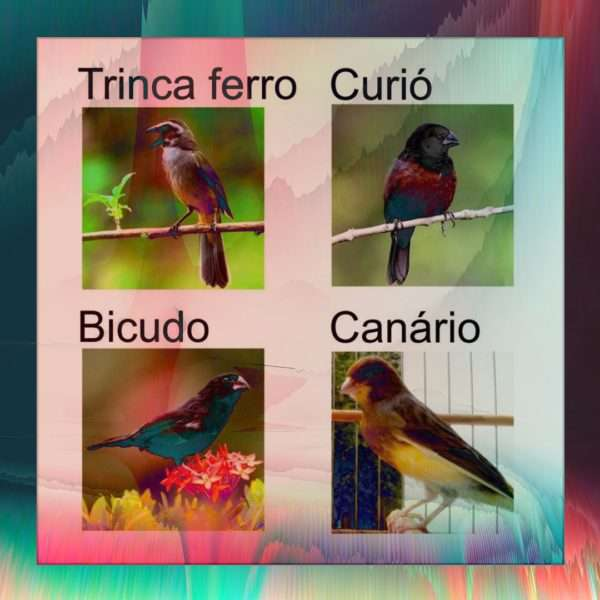 Cantos dos Pássaros
